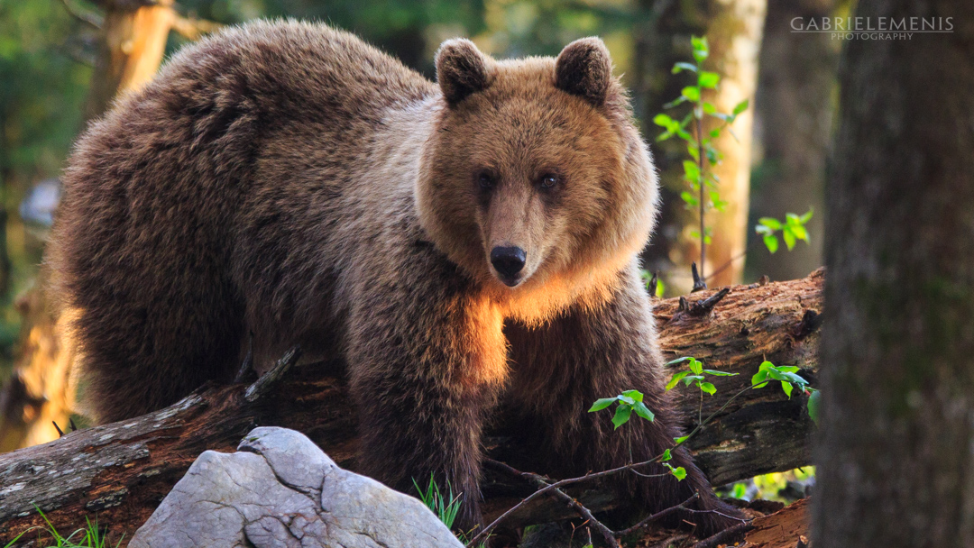 fotomenis_03_IMG_7212