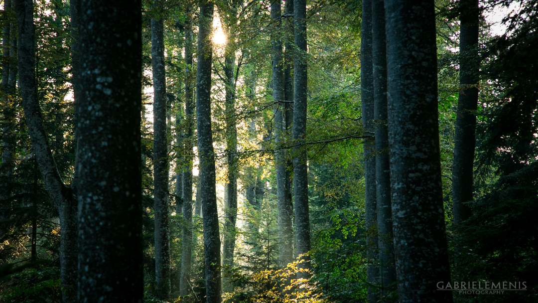 fotomenis_09_IMG_9525